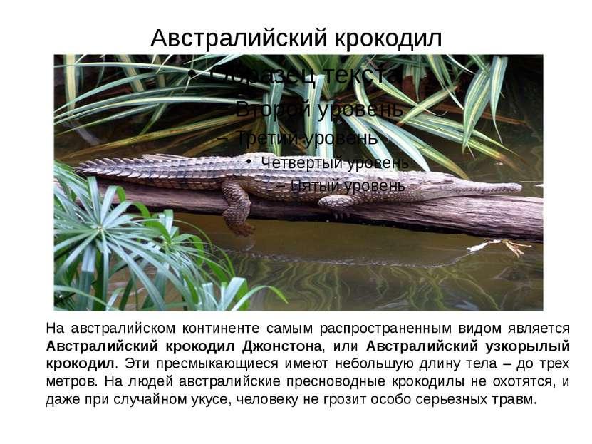 Австралийский крокодил На австралийском континенте самым распространенным вид...