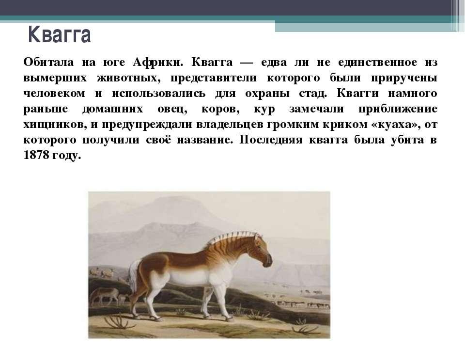 Квагга Обитала на юге Африки. Квагга — едва ли не единственное из вымерших жи...