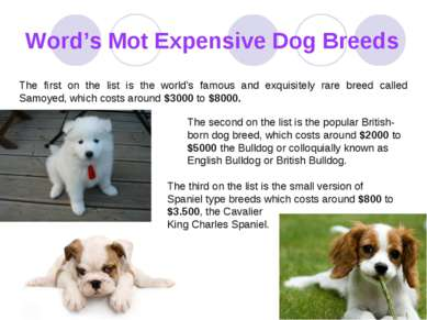 Word's Mot Expensive Dog Breeds The first on the list is the world's famous a...