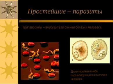 Простейшие – паразиты Трипаносомы – возбудители сонной болезни человека. Дизе...