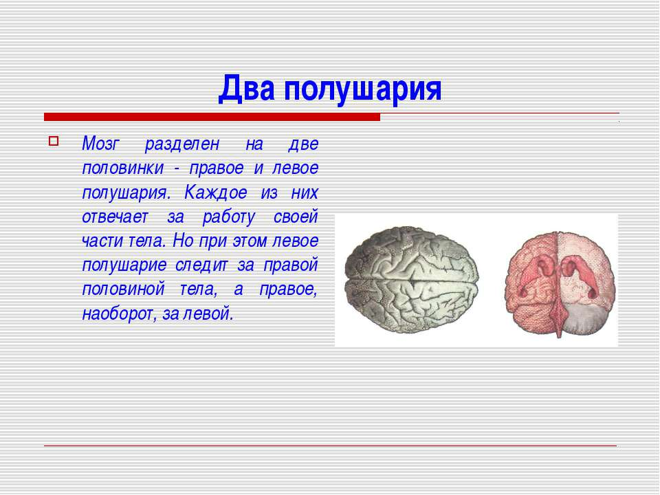Два полушария Мозг разделен на две половинки - правое и левое полушария. Кажд...