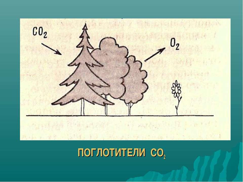 ПОГЛОТИТЕЛИ СО2