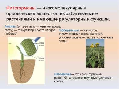 Фитогормоны — низкомолекулярные органические вещества, вырабатываемые растени...