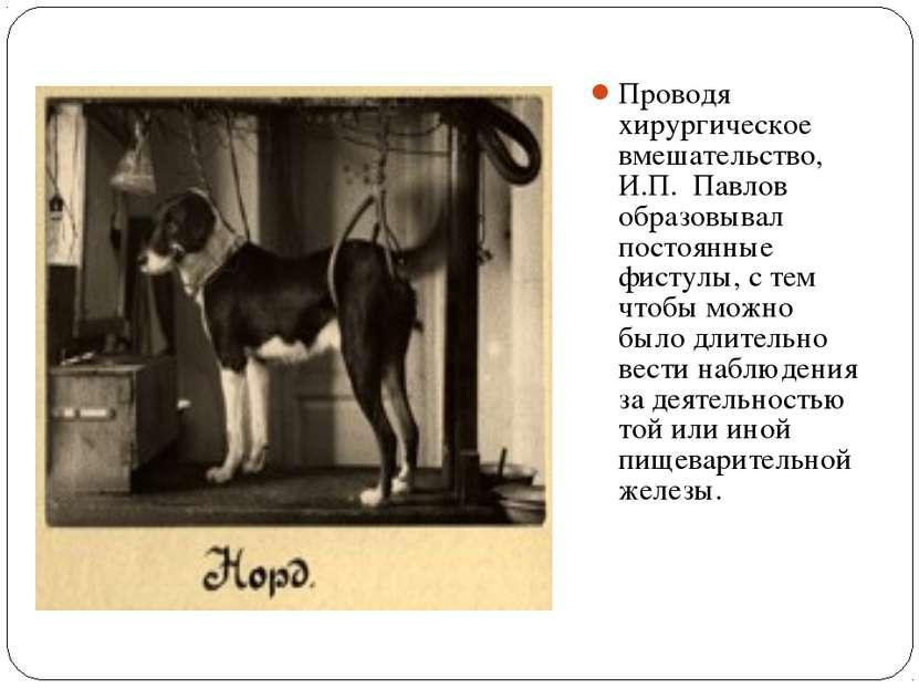 Проводя хирургическое вмешательство, И.П. Павлов образовывал постоянные фисту...