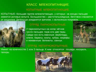 КЛАСС МЛЕКОПИТАФЩИЕ. КОПЫТНЫЕ МЛЕКОПИТАЮЩИЕ. КОПЫТНЫЕ- большая группа млекопи...