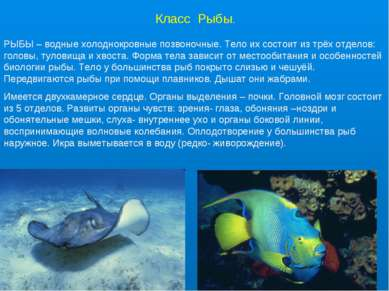 Класс Рыбы. РЫБЫ – водные холоднокровные позвоночные. Тело их состоит из трёх...
