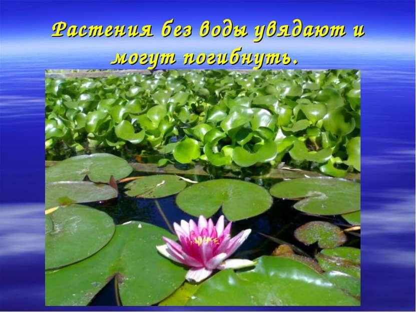 Растения без воды увядают и могут погибнуть.