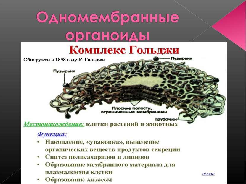 Сусанинская средняя школа учитель биологии Карпушева Анна Эдуардовна Сусанинс...