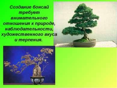 Создание бонсай требует внимательного отношения к природе, наблюдательности, ...
