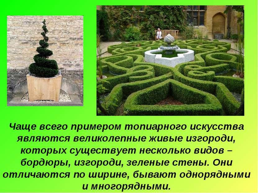 Чаще всего примером топиарного искусства являются великолепные живые изгороди...