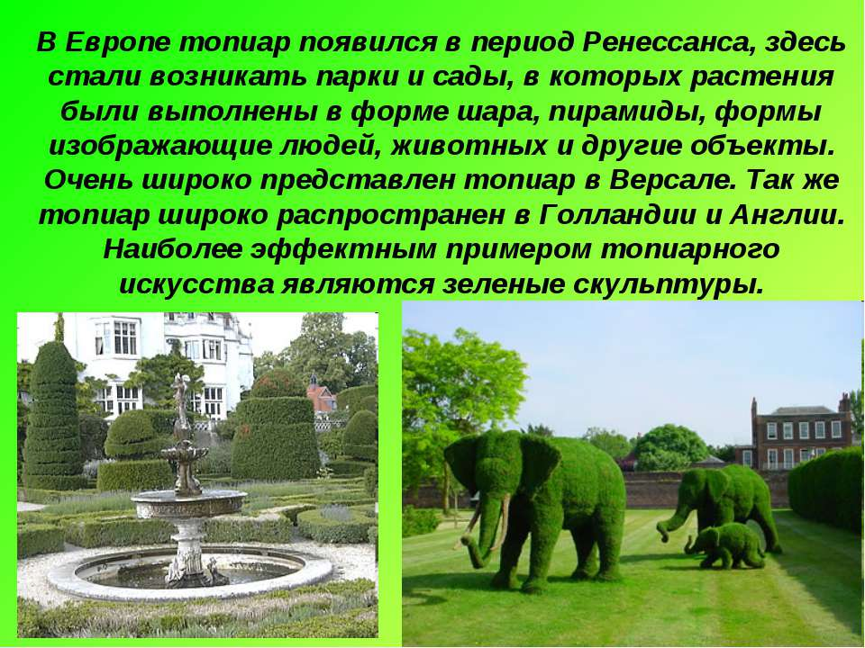 В Европе топиар появился в период Ренессанса, здесь стали возникать парки и с...