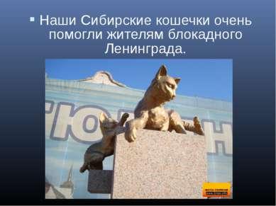 Наши Сибирские кошечки очень помогли жителям блокадного Ленинграда.
