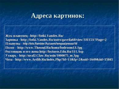 Адреса картинок: Жук-плавунец - http://fotki.Yandex.Ru/ Зарянка - http://fotk...