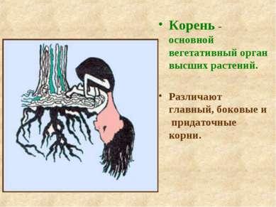 Корень - основной вегетативный орган высших растений. Различают главный, боко...