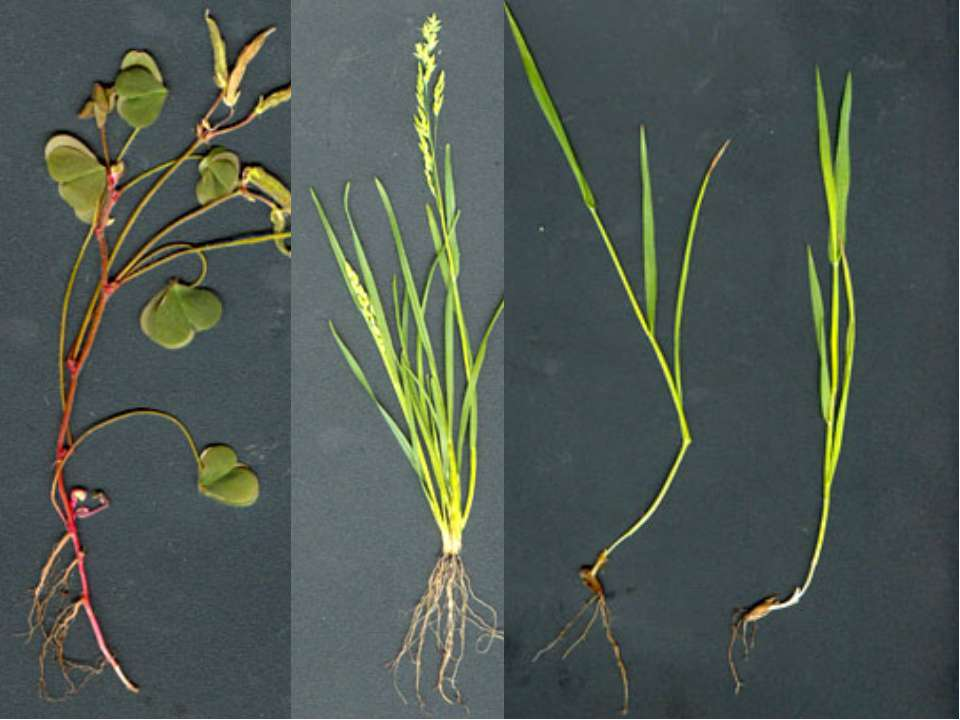 Определи типы корневых систем у растений