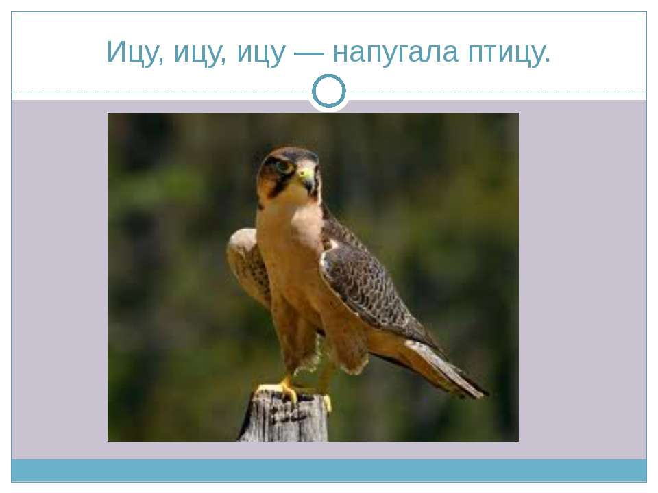 Ицу, ицу, ицу — напугала птицу.