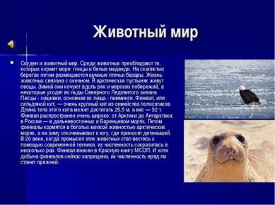 Животный мир Скуден и животный мир. Среди животных преобладают те, которых ко...