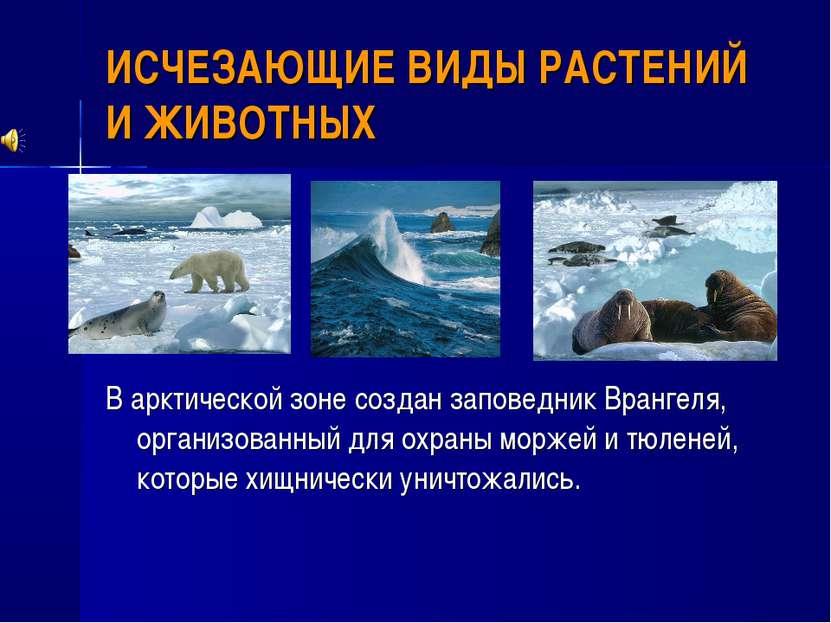 ИСЧЕЗАЮЩИЕ ВИДЫ РАСТЕНИЙ И ЖИВОТНЫХ В арктической зоне создан заповедник Вран...