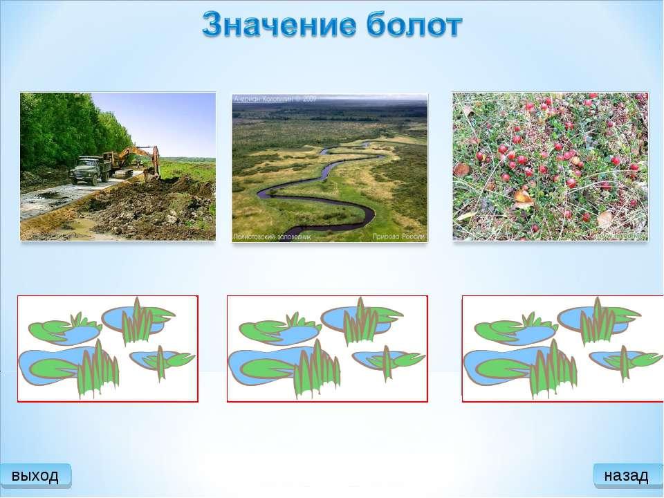 Роль болот в природе и жизни человека