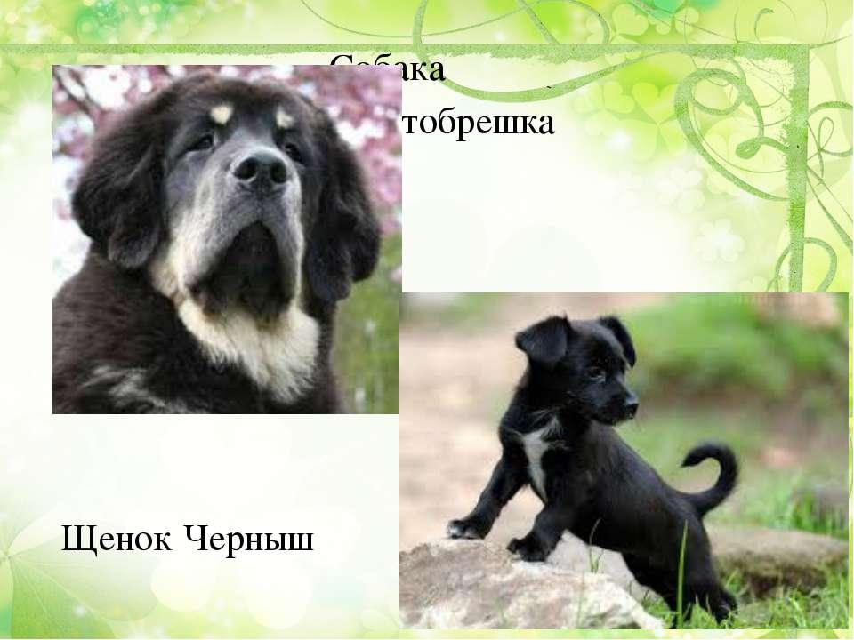 Собака Пустобрешка Щенок Черныш