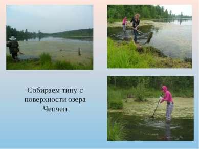Собираем тину с поверхности озера Чепчеп