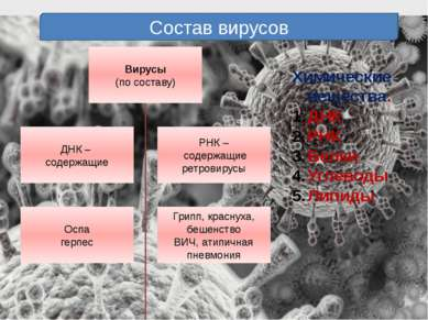 Состав вирусов Химические вещества. ДНК РНК Белки Углеводы Липиды