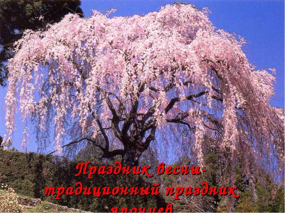 Праздник весны- традиционный праздник японцев
