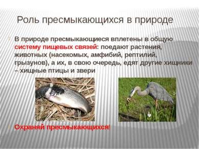 Роль пресмыкающихся в природе В природе пресмыкающиеся вплетены в общую систе...