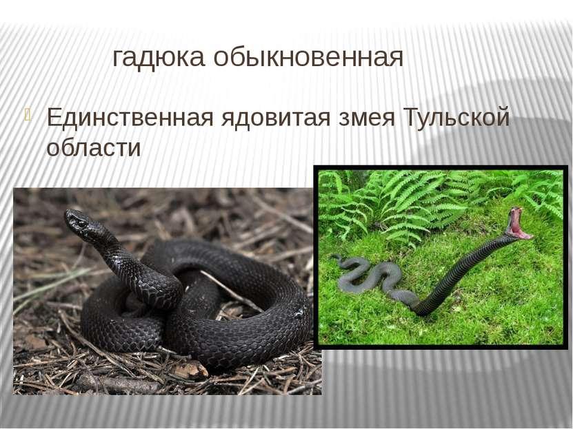 гадюка обыкновенная Единственная ядовитая змея Тульской области