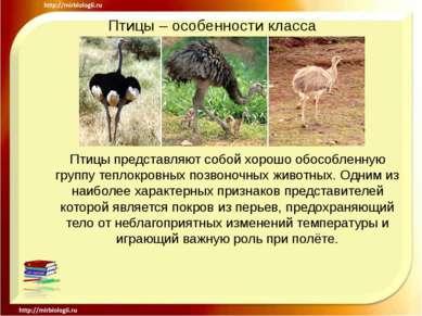 Птицы – особенности класса Птицы представляют собой хорошо обособленную групп...