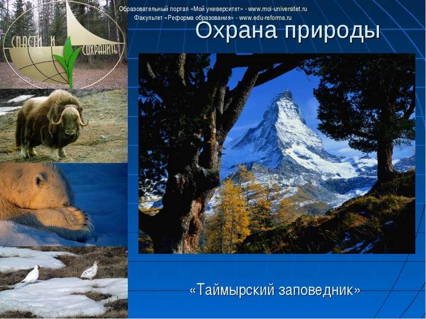 Охрана природы «Таймырский заповедник» Образовательный портал «Мой университе...