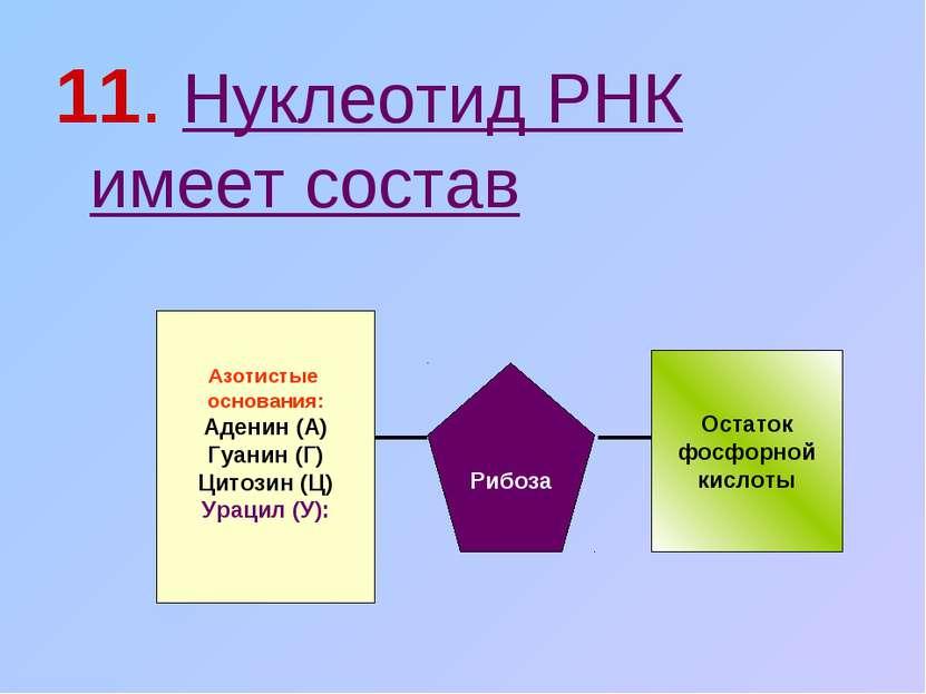 11. Нуклеотид РНК имеет состав