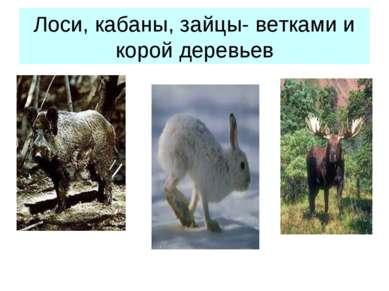 Лоси, кабаны, зайцы- ветками и корой деревьев
