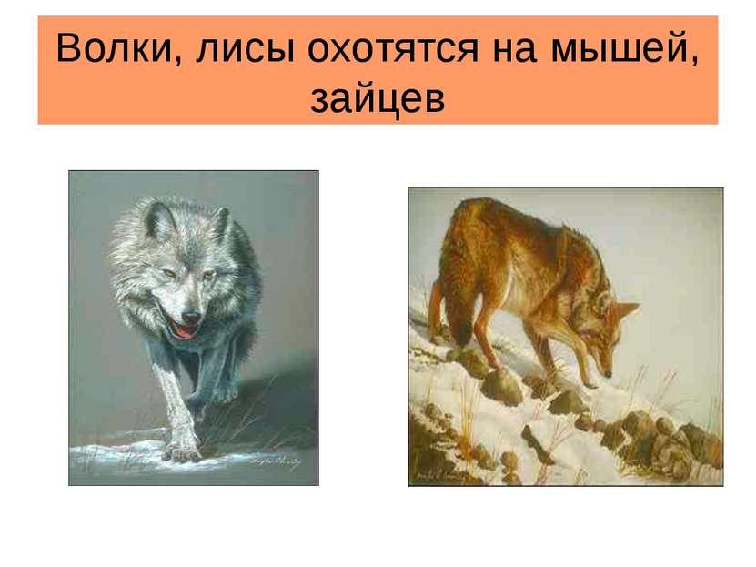 Волки, лисы охотятся на мышей, зайцев