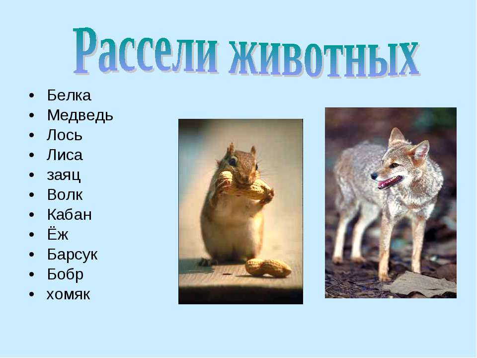 Белка Медведь Лось Лиса заяц Волк Кабан Ёж Барсук Бобр хомяк
