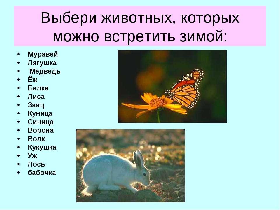 Выбери животных, которых можно встретить зимой: Муравей Лягушка Медведь Ёж Бе...