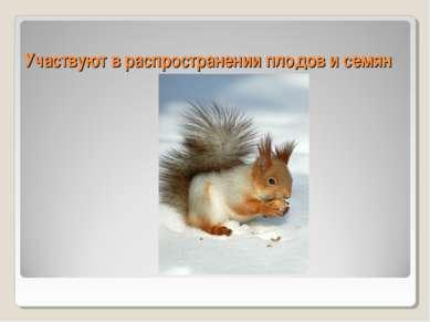 Участвуют в распространении плодов и семян
