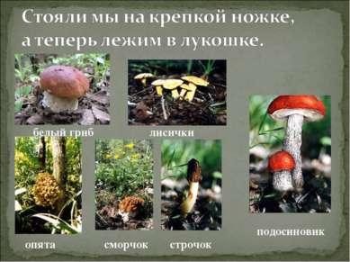 белый гриб лисички подосиновик опята строчок сморчок