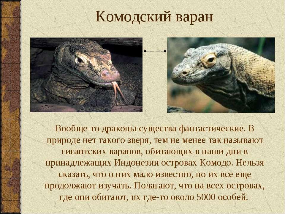 Комодский варан Вообще-то драконы существа фантастические. В природе нет тако...