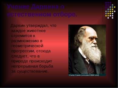 Учение Дарвина о естественном отборе. Дарвин утверждал, что каждое животное с...