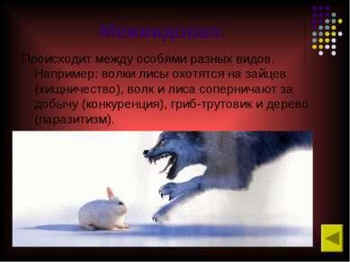 Межвидовая. Происходит между особями разных видов. Например: волки лисы охотя...