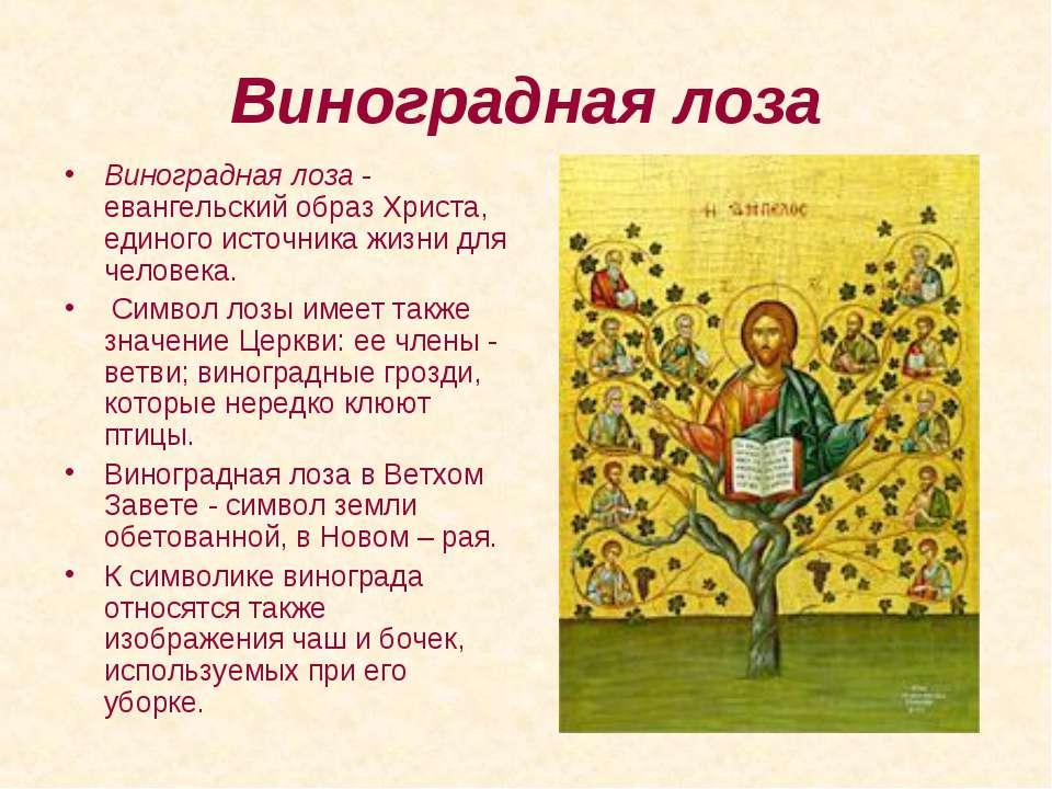 Виноградная лоза Виноградная лоза - евангельский образ Христа, единого источн...