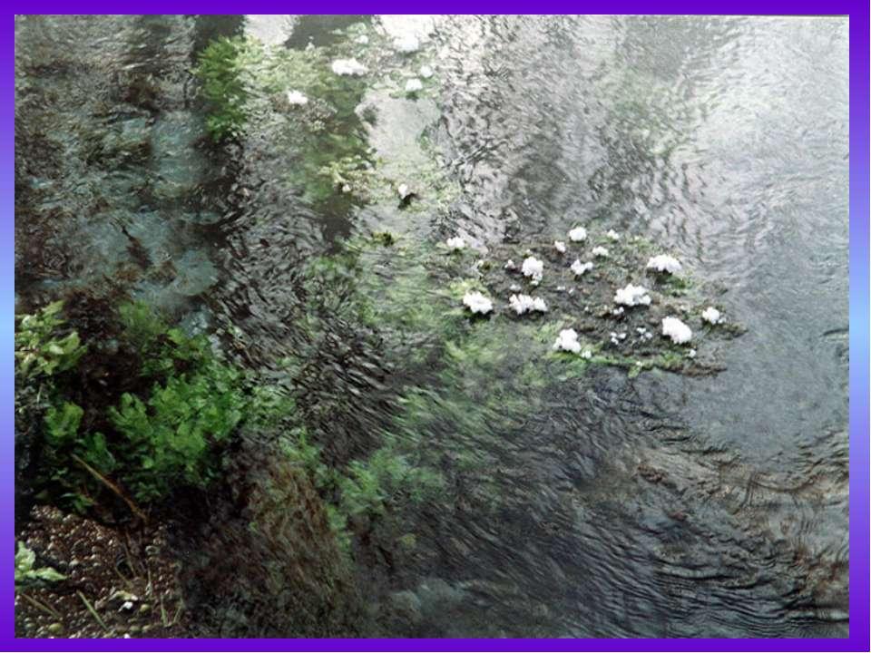 Уникален органический мир Байкала. В озере встречается около1500 видов животн...
