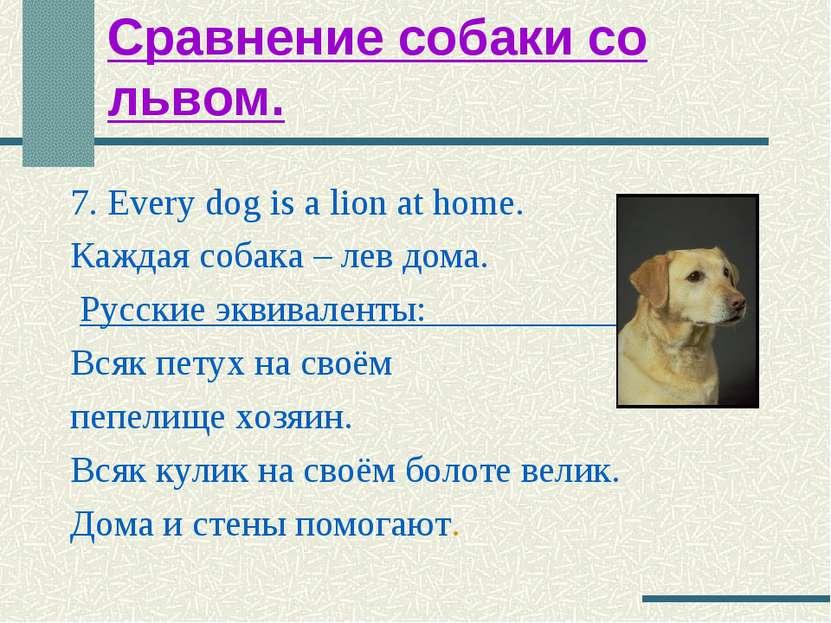 Сравнение собаки со львом. 7. Every dog is a lion at home. Каждая собака – ле...