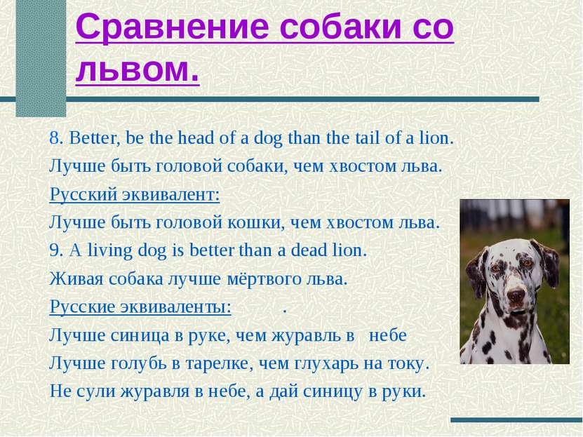 Сравнение собаки со львом. 8. Better, be the head of a dog than the tail of a...