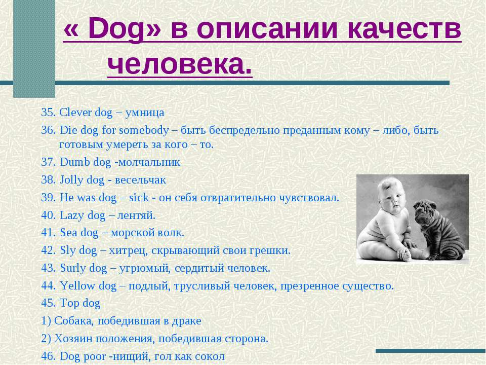 « Dog» в описании качеств человека. 35. Clever dog – умница 36. Die dog for s...