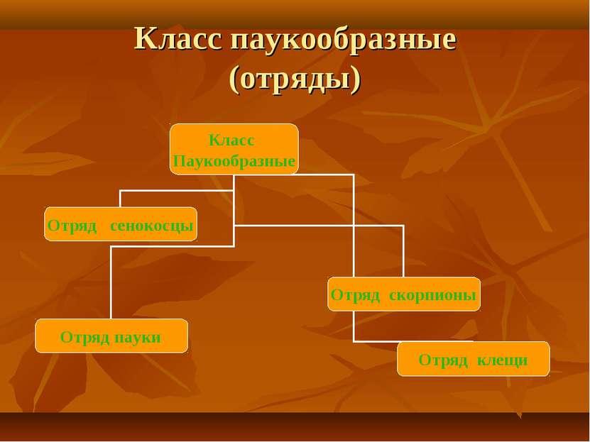 Класс паукообразные (отряды)