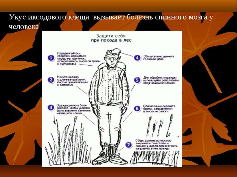 Укус иксодового клеща вызывает болезнь спинного мозга у человека