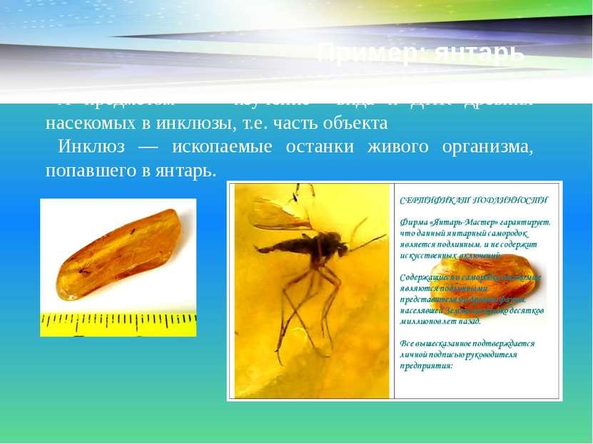 Пример: янтарь А предметом - изучение вида и ДНК древних насекомых в инклюзы,...
