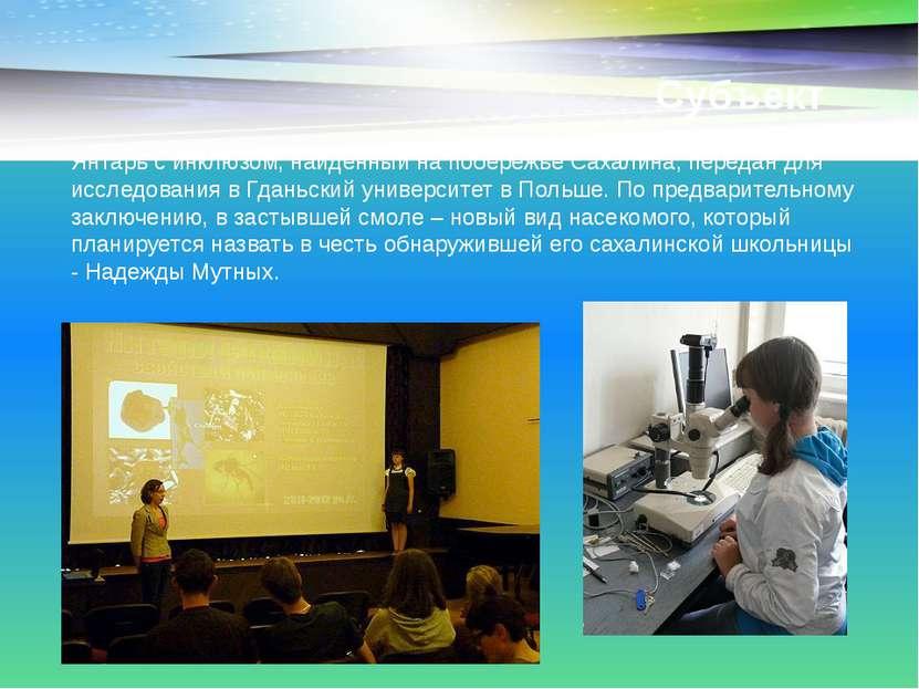 Субъект Янтарь с инклюзом, найденный на побережье Сахалина, передан для иссле...